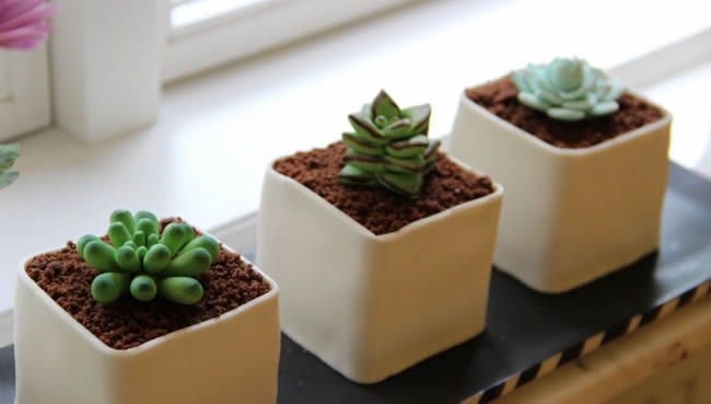 Succulents have graduated from little cacti in pots as wedding favours, to wedding cake décor