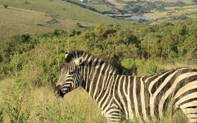Wildlife and Zip Line thrills at Lake Eland Game Reserve